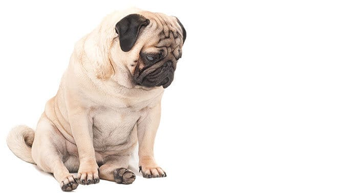 dog breeds that look sad