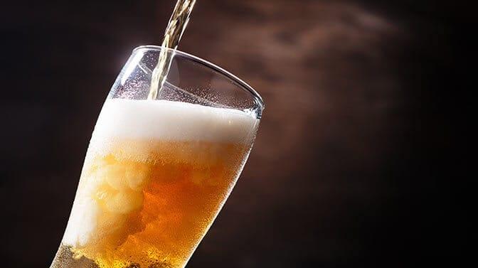can pugs drink beer water