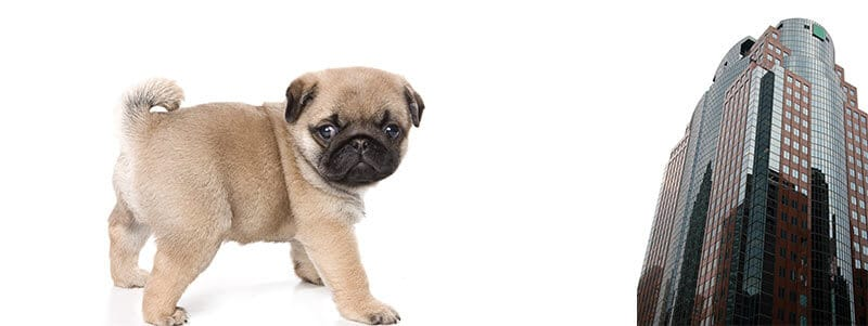 how to potty train your pug puppy in a high rise apartment