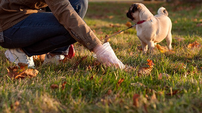 how to train a pug to poop outside