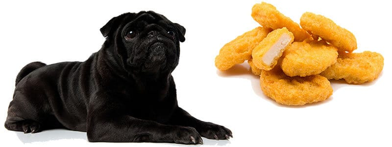 can Pugs eat chicken nuggets