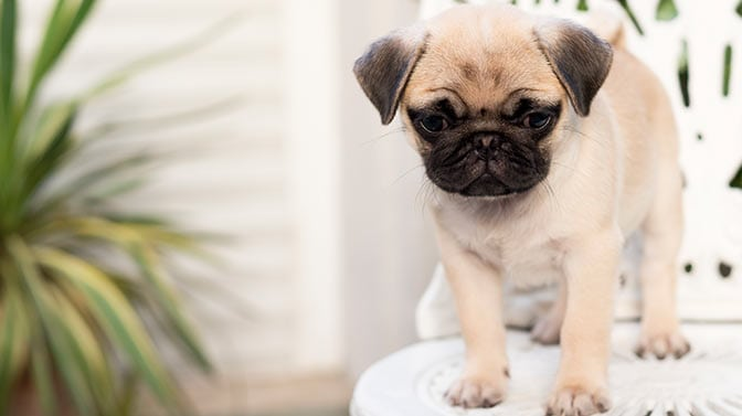 puppy toilet training problems