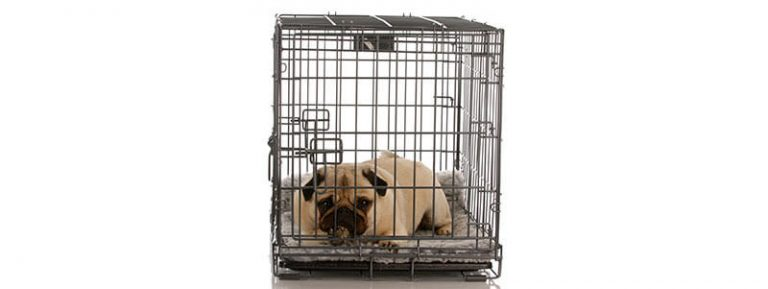 should I crate train my Pug