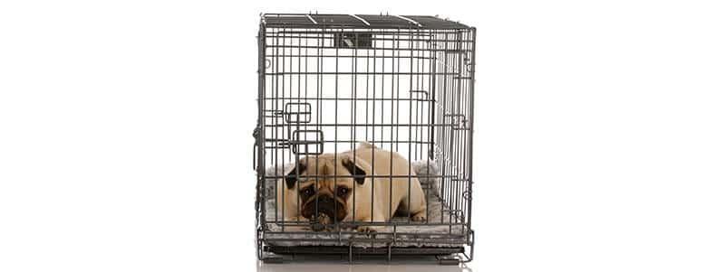should I crate train my Pug