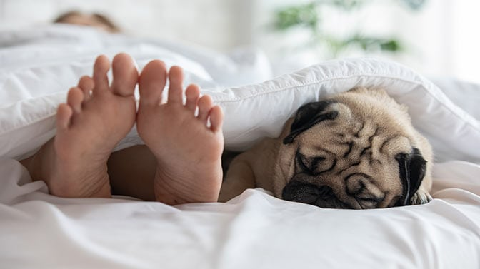 take your pug puppy outside in the morning