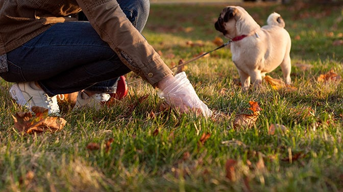 how to stop your Pug from pooping in the house