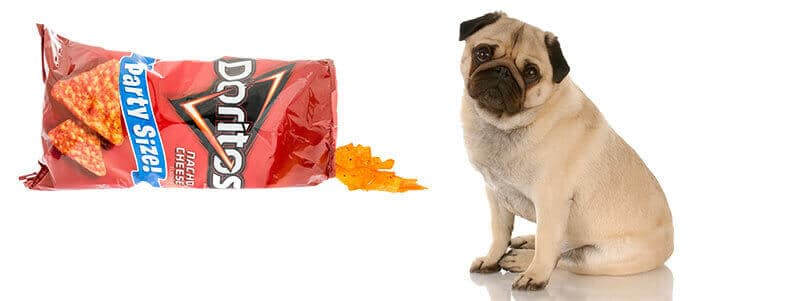 can pugs eat doritos