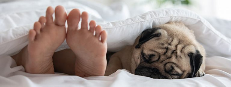 can Pugs jump on the bed