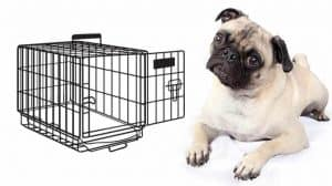 how to crate train a pug puppy