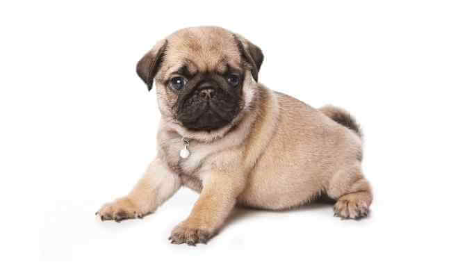 cute dog names beginning with I