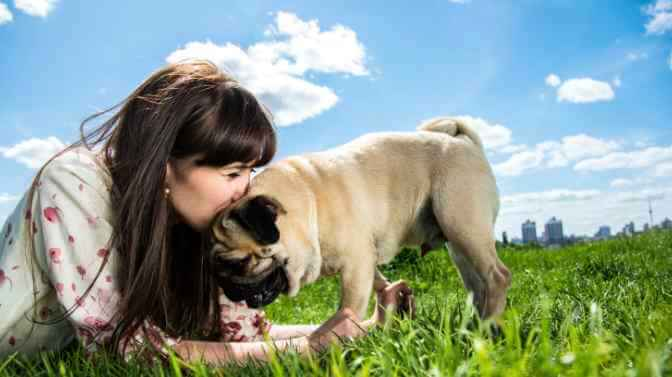 why do Pugs lick their owners
