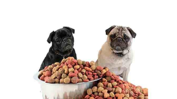 best dog food for Pugs with skin allergies