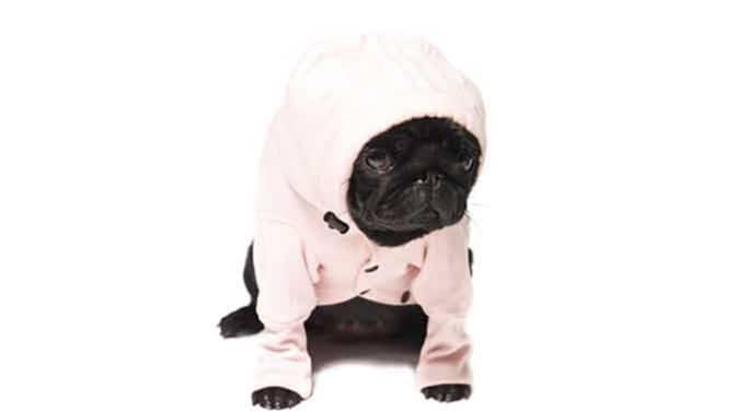 best hoodies for Pugs