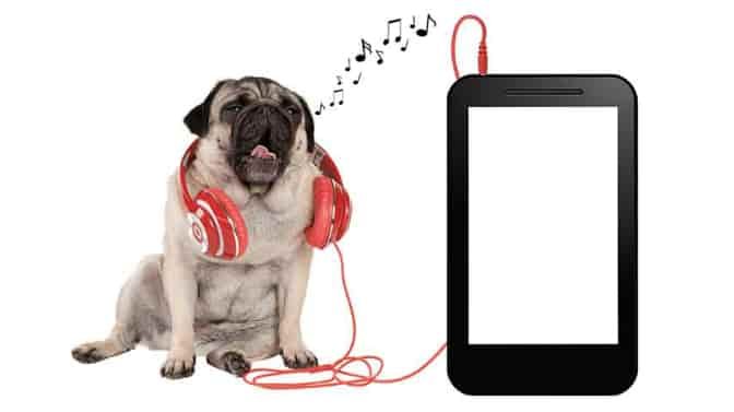 soothing music for Pugs