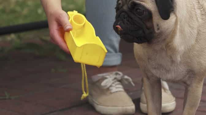 average weight for Pug dogs