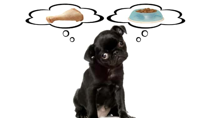 can Pugs eat a raw diet