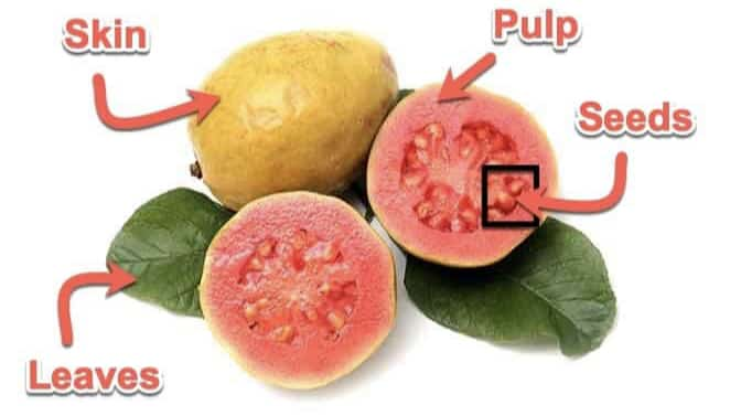 edible part of guava