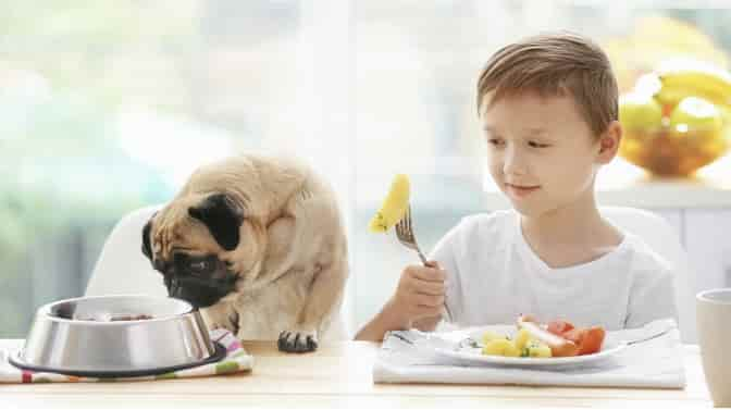 how to put your Pug on a diet