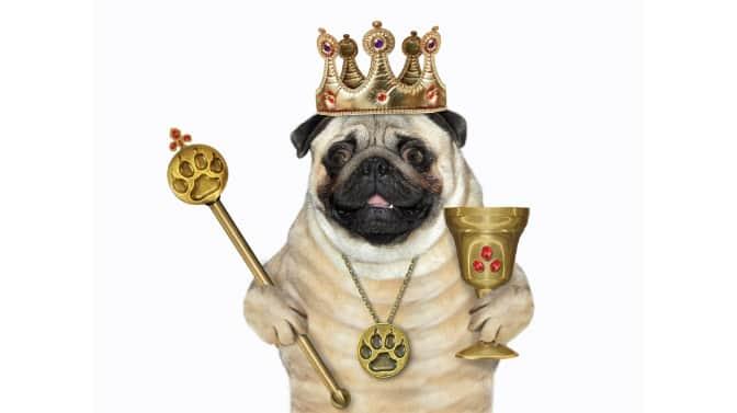 royal Pug names